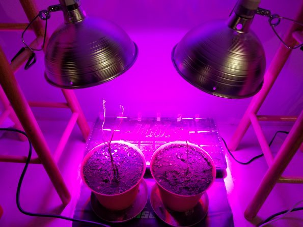 Starting Seed Plant Lighting For Growing Seed Light
