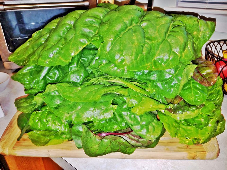 Swiss Chard Recipe